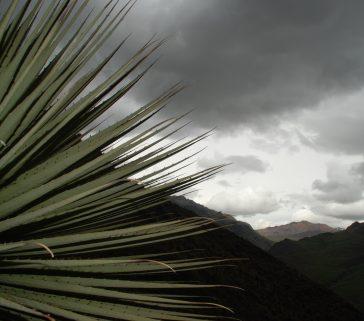 Bosque de Puya Raimondi 06