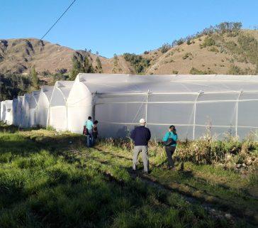 Invernaderos en la campiña de Cajamarca