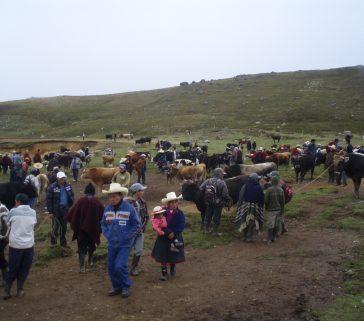 Feria ganadera rural