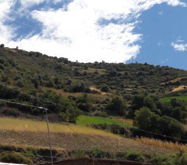 Parcelas de alfalfa y maiz en la comunidad de Unión Ambo-Mayo 2018