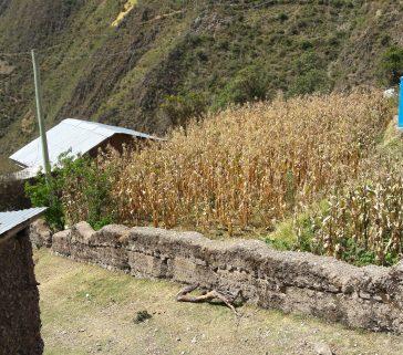 Parcelas de maiz-Mayo 2018