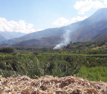 Campos de cañaverales-Valle de Pampas-Junio 2018